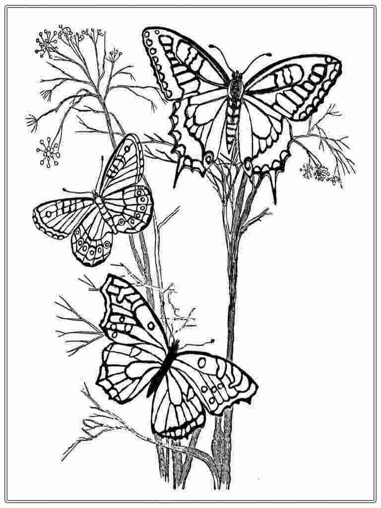 Coloring Pages Butterflies For Adults 1000 Images About My Coloring Book On Pinterest Adults Butterflies Pages Col Blumen Ausmalen Malbuch Vorlagen Malvorlagen