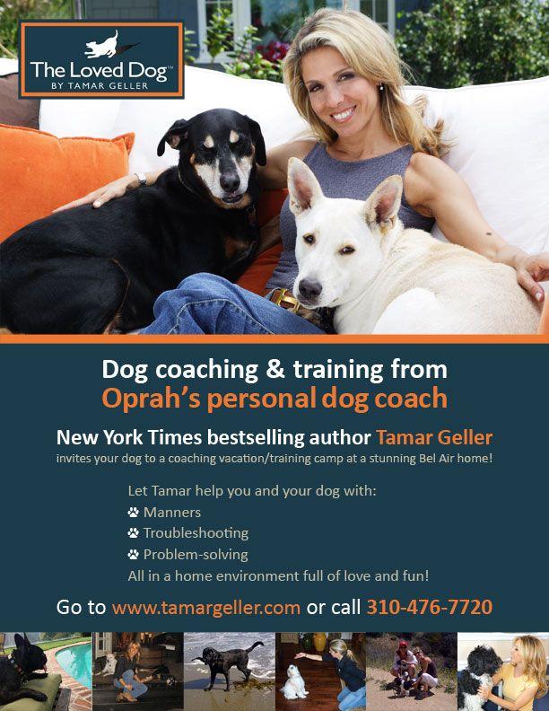Dog Training Tamar Geller Coaching Vacation Dog Trainer Dog