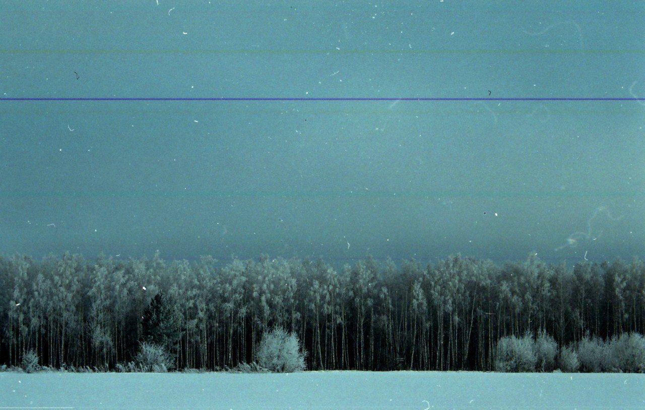 Небольшой лес в Орловской области январским вечером