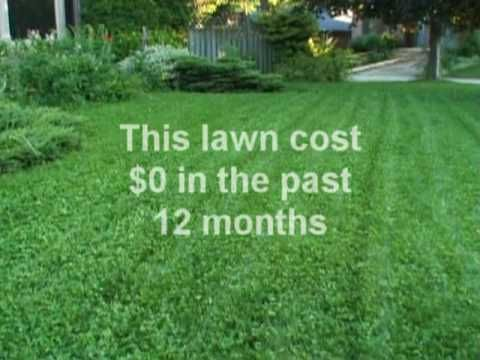 Clover, The Ecological Lawn Alternative: How To Start U0026 Growing Tips