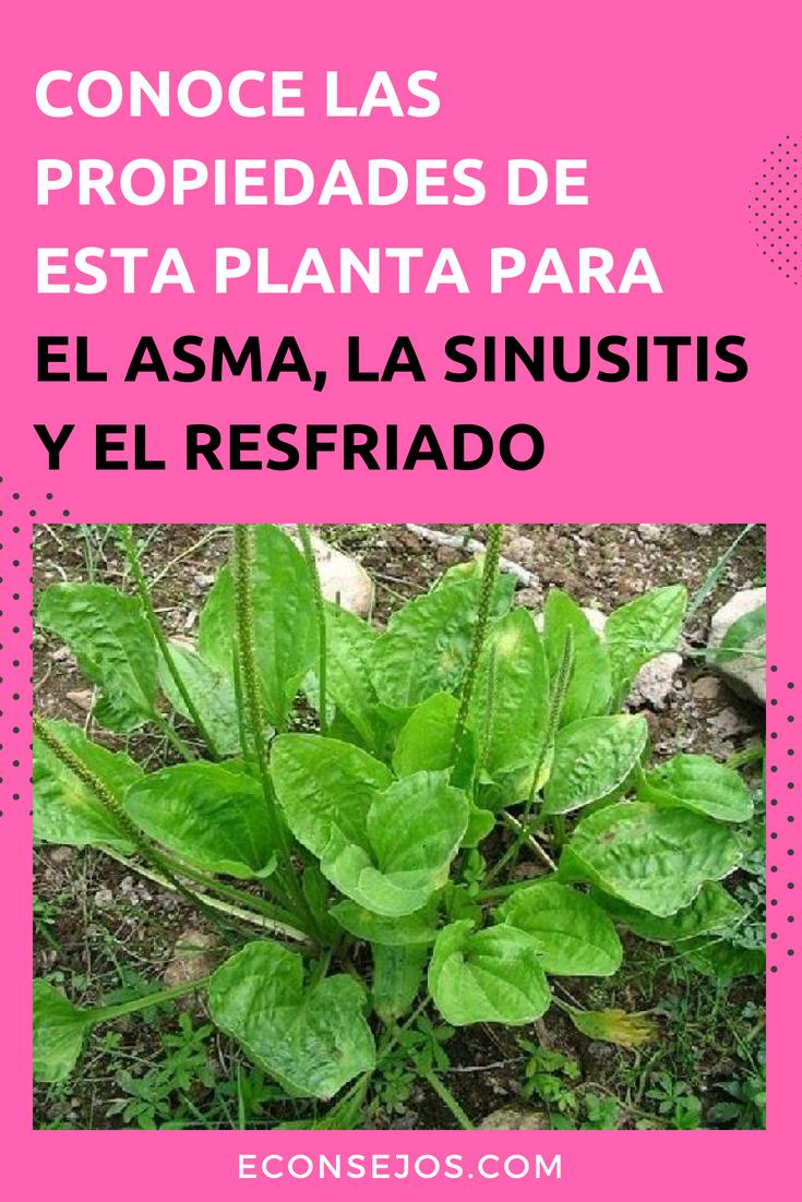 recetas+naturales+para+la+rinitis
