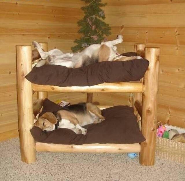 Double Decker Pet Bed So Cute Furry ♡ Dog Bunk