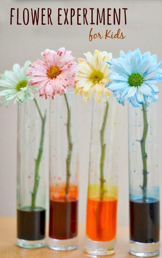 Flower Experiment for Kids | Färben, Blumen und Kind