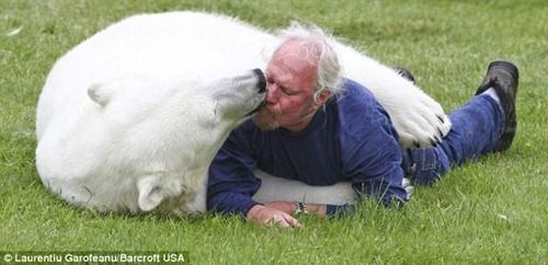 Animal trainer wrestles a fully grown polar bear 6 he raised from a baby