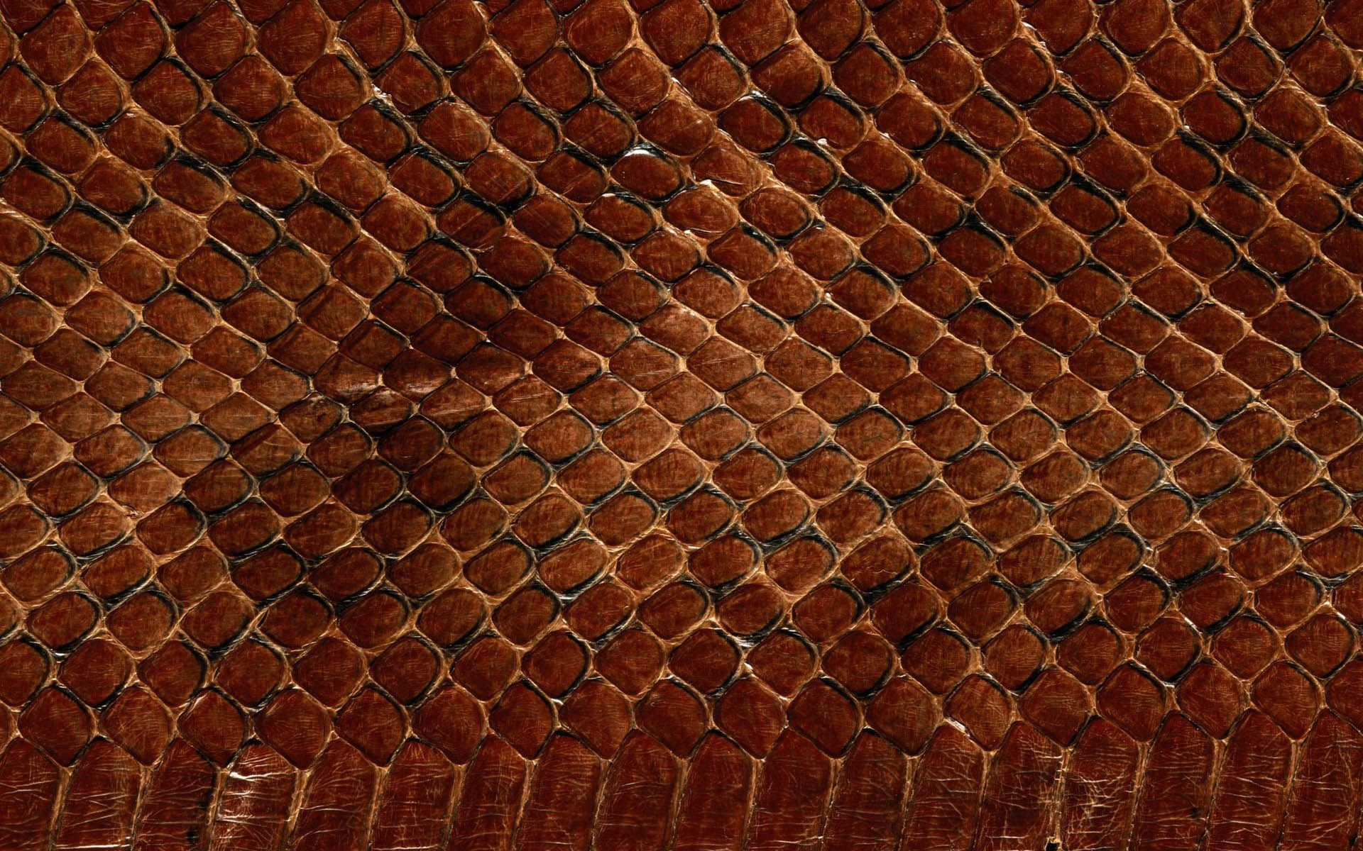 snake-skin-animals-scales-textures-animals.jpg 1,920×1,200 ...