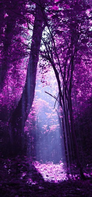 Purple Forest Photo Flavia On 500px Pinned By The