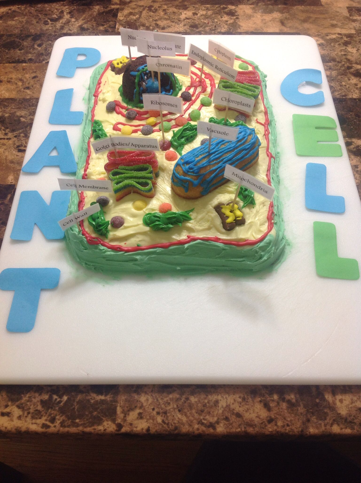 Treys science project plant cell cake jillys pins pinterest treys science project plant cell cake ccuart Choice Image