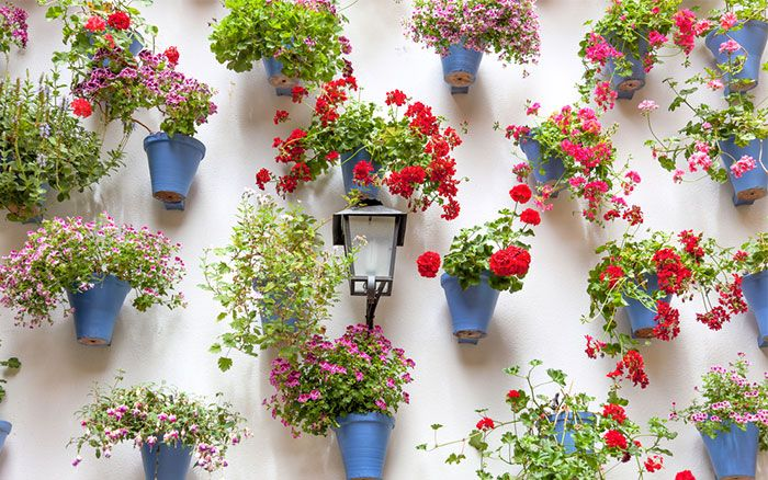 The origins of container gardening can be traced far back into ancient history. Initially, gardeners used them for edible and medicinal plants in Greece, China, Egypt and India. Over time, containers became more popular and were used to grow all kinds of plants.