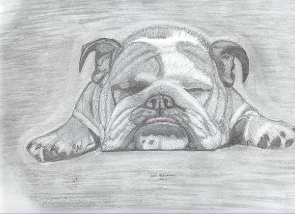 English Bulldog By Don Gallacher English Bulldog Art Bulldog