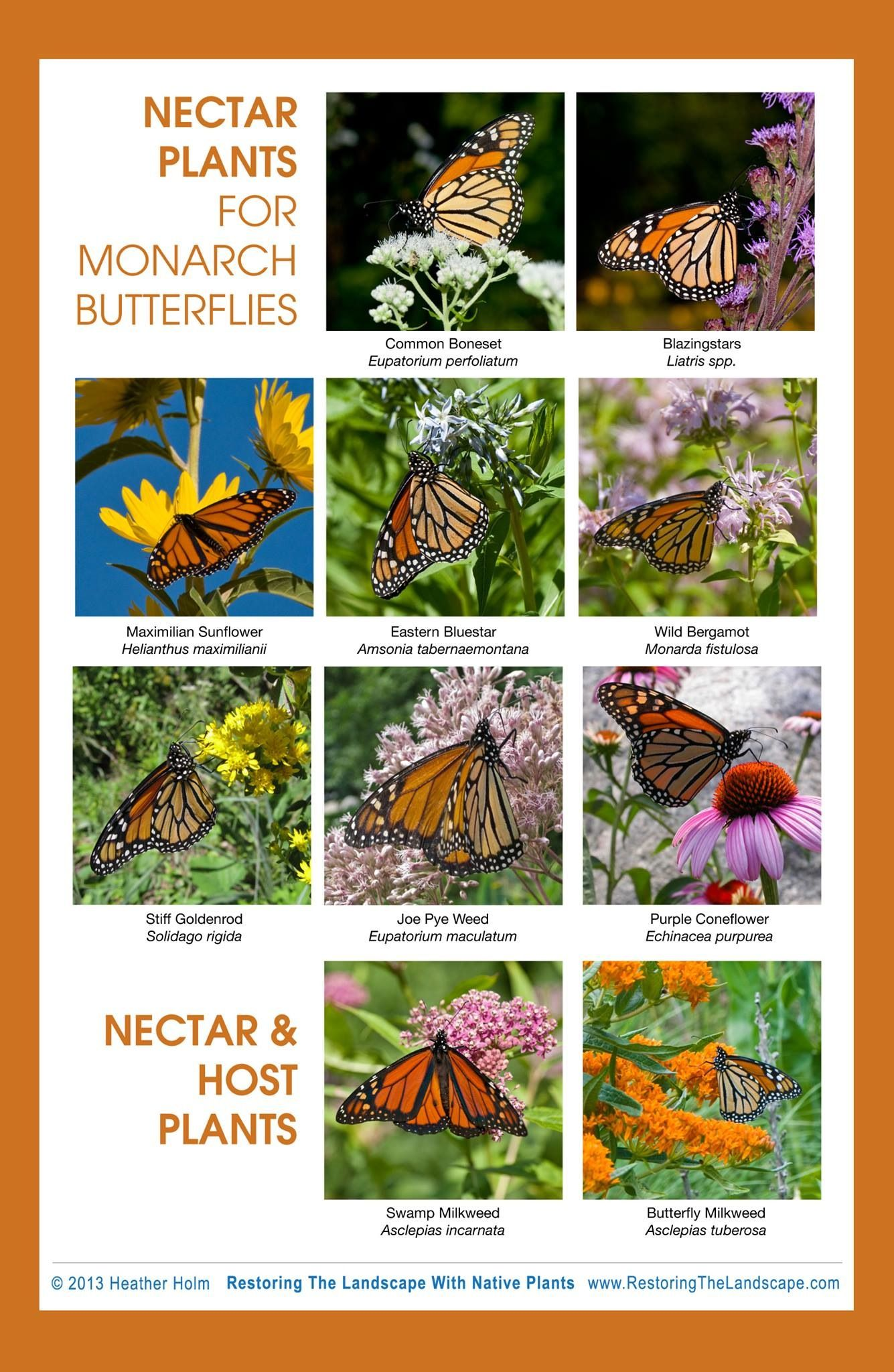 Best Nectar Plants For Monarchs And Other Butterflies. Remember When  Planting For Bees And Butterflies