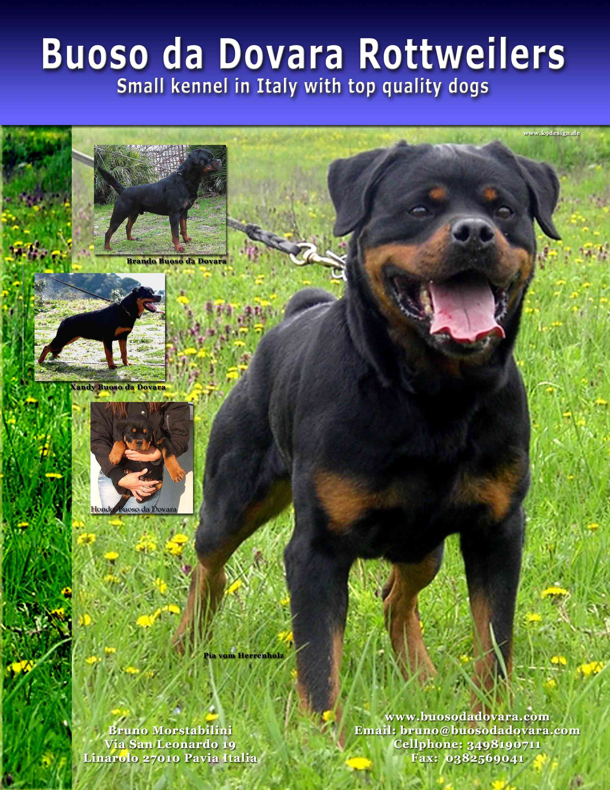 Akc rottweiler history