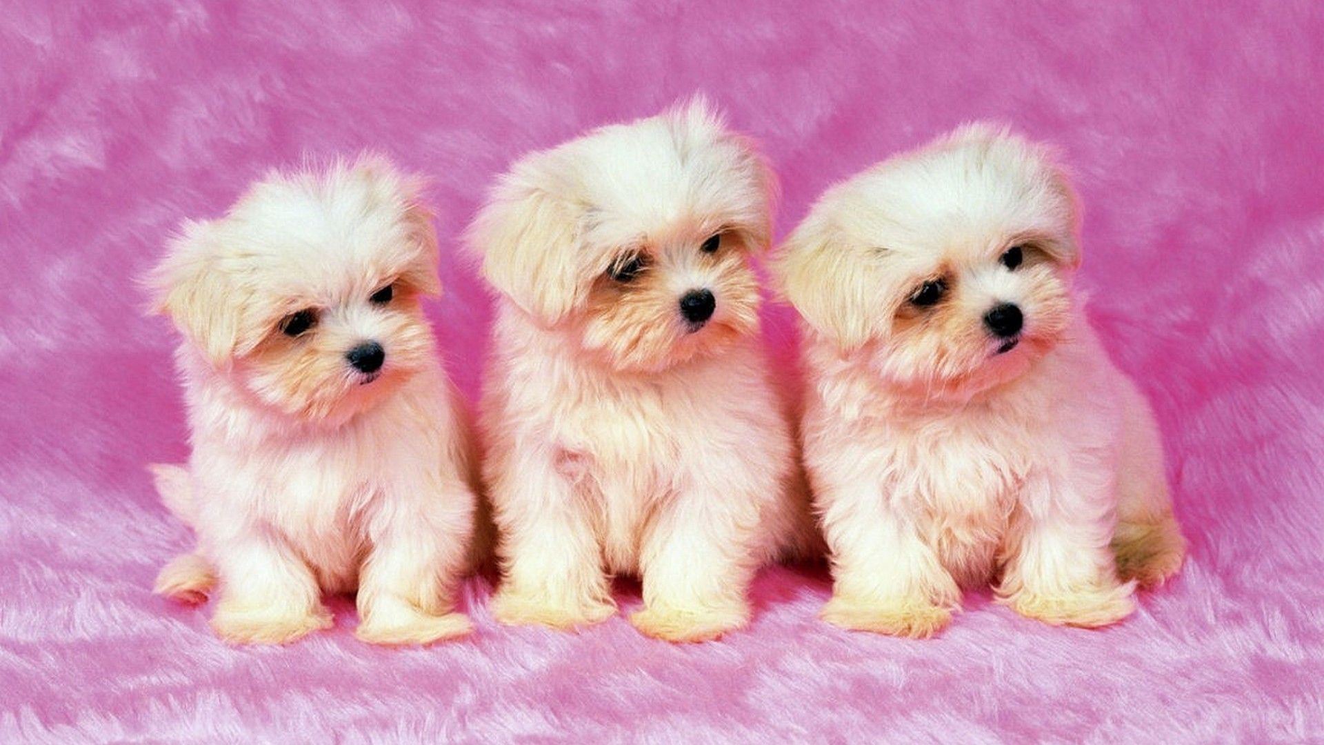 Cute Puppies Background Wallpaper Hd 2021 Live Wallpaper Hd Cute Dog Wallpaper Dog Wallpaper Puppy Backgrounds