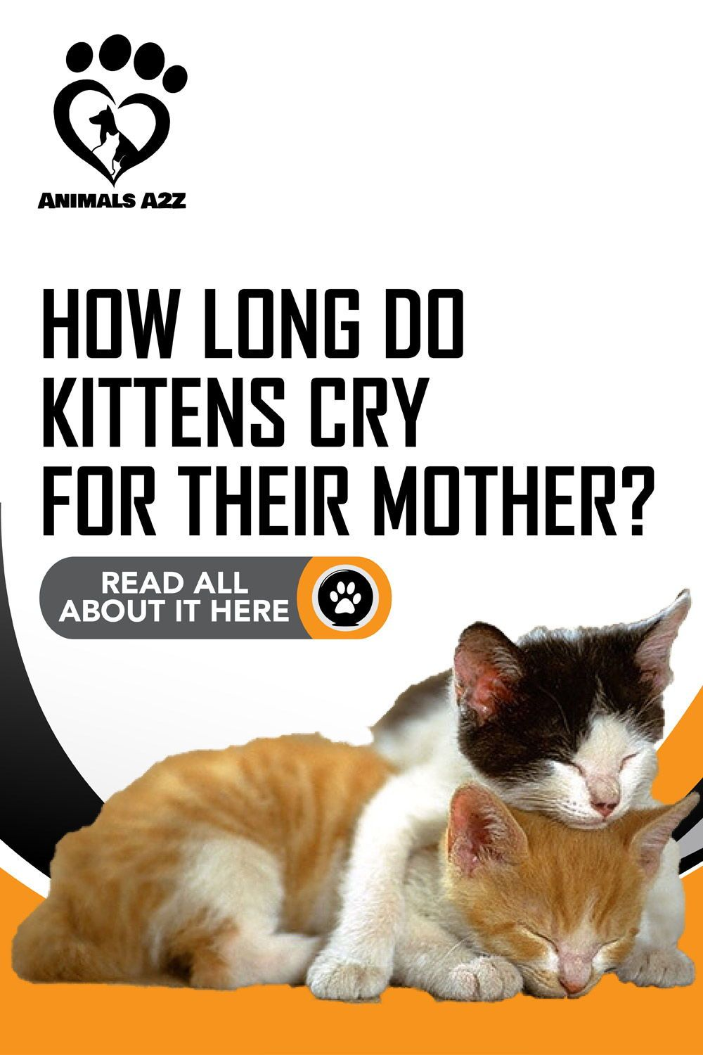How Long Do Kittens Cry For Their Mother Detailed Answer In 2020 Kittens Cat Behavior Cat Facts