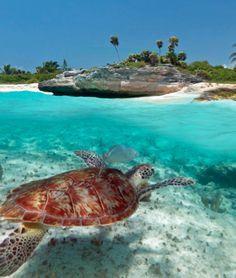 La naturaleza convierte a #PlayaDelCarmen, en uno de los sitios más increíbles del mundo para vacacionar y desconectarse de la rutina.