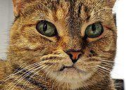 Adopt a furry feline from AniMeals!!!!