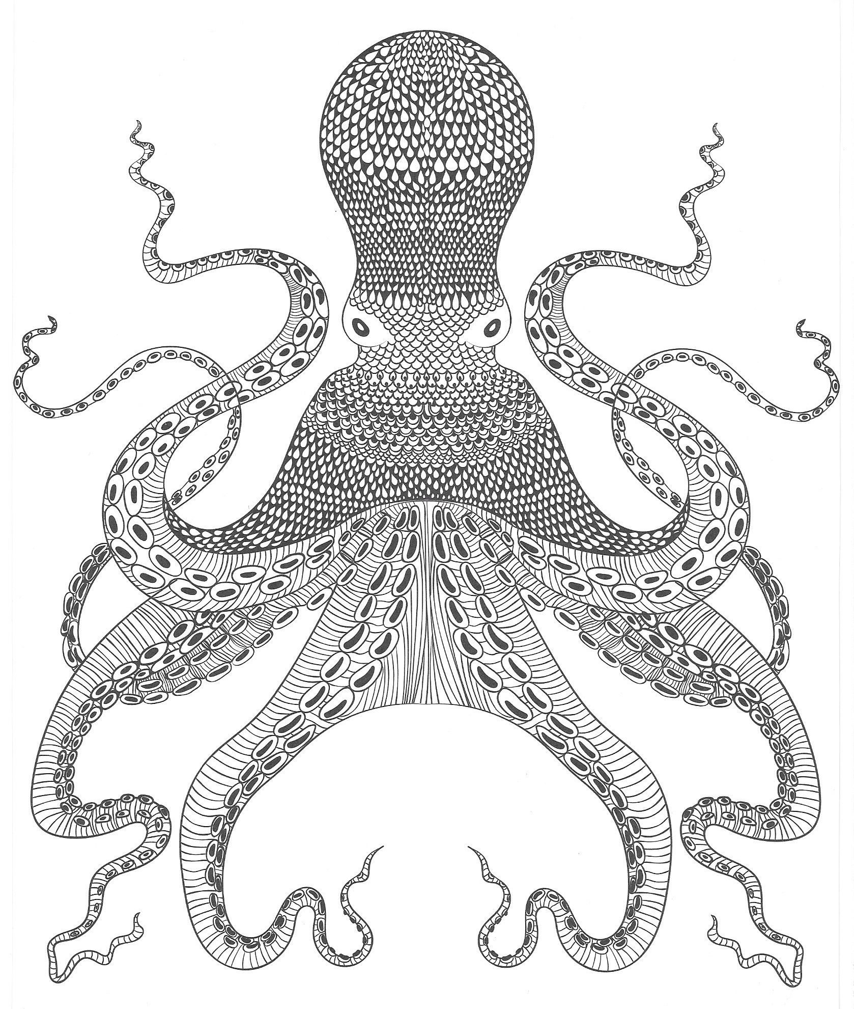 Krake Oktopus | Malvorlagen - Coloring Pages | Pinterest