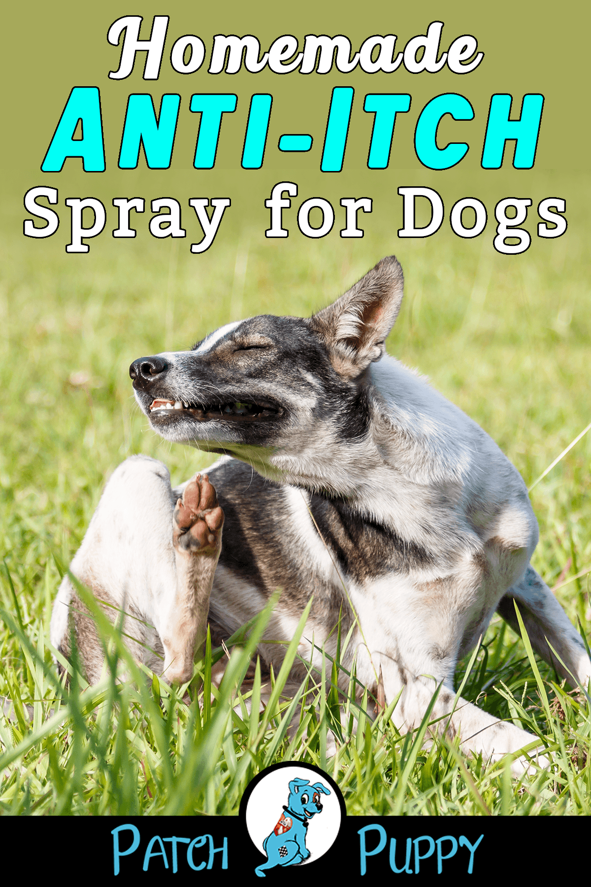 Homemade Anti Itch Spray For Dogs Easy 3 Ingredient Recipe Dog Dry Skin Dog Itching Dog Anti Itch Spray