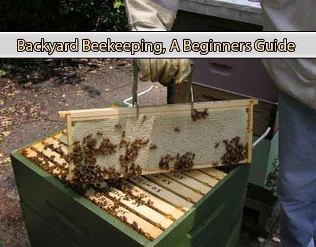 Backyard Beekeeping, A Beginners Guide ...