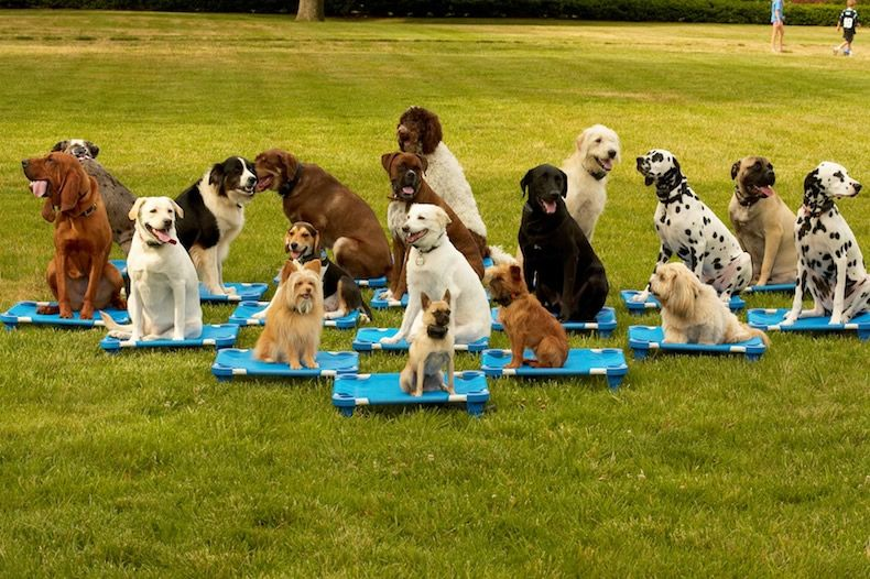Group Training For Dog Obedience Dog Obedience Classes Dog