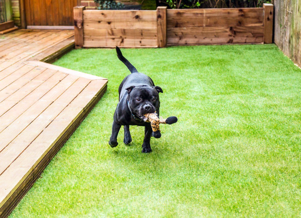 9 Clever Landscaping Hacks For Your Best Ever Yard Best Artificial Grass Artificial Grass For Dogs Backyard Grass Alternative
