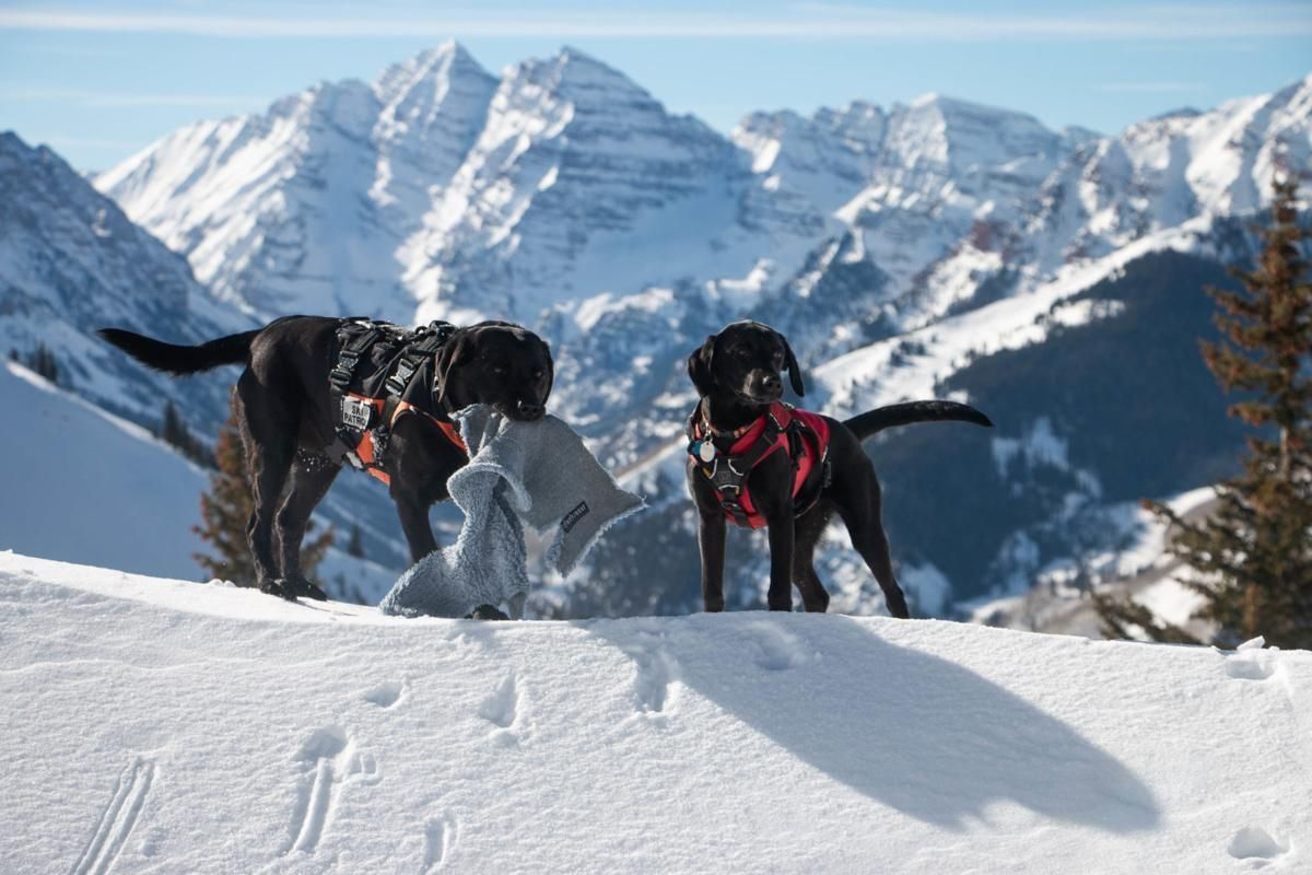 The Few The Proud The Playful The Dogs Of Ski Patrol Skiing Dogs Colorado