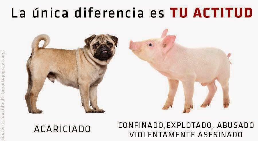 Despierta Te Necesitan Yo Nunca Comeria Carne De Caballo Derechos De Los Animales Frases Veganas Lenguaje De Los Perros