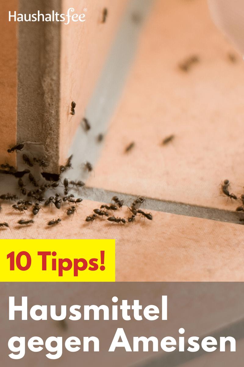 Hausmittel Gegen Ameisen Haushaltsfee Org In 2020 Hausmittel Gegen Ameisen Ameisen Im Haus Ameisen Im Haus Bekampfen