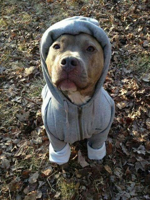 Winter Dog Coats Sweaters And Jackets All About Dogs Dogs