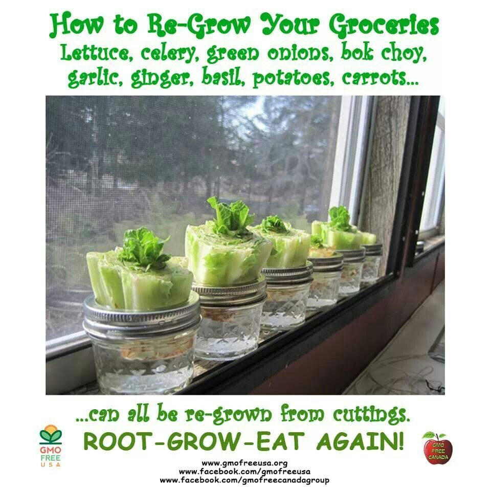 17 Best Images About Regrow Veggies On Pinterest: Things To Do On My Balcony