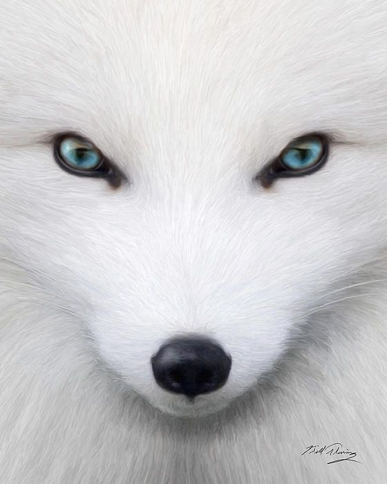 Arctic Fox By Bill Fleming With Images Albino Animals Arctic Fox Rare Animals