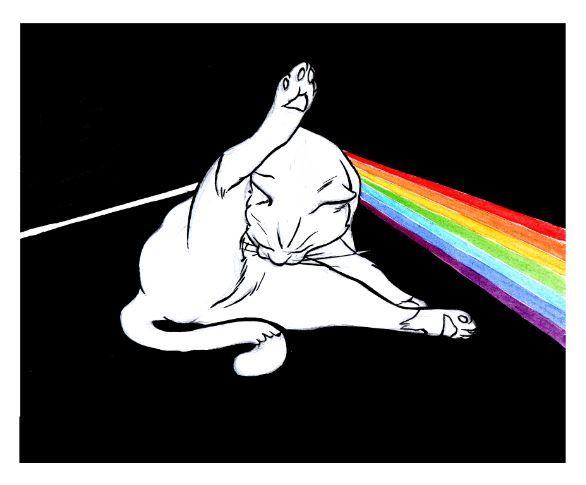 The Dark Side of the Cat, illustration, album, pink floyd, rainbow, black, funny, cover, ink, art, dark, moon,humor,music,comic,sketch,graphic,design,tail,animal