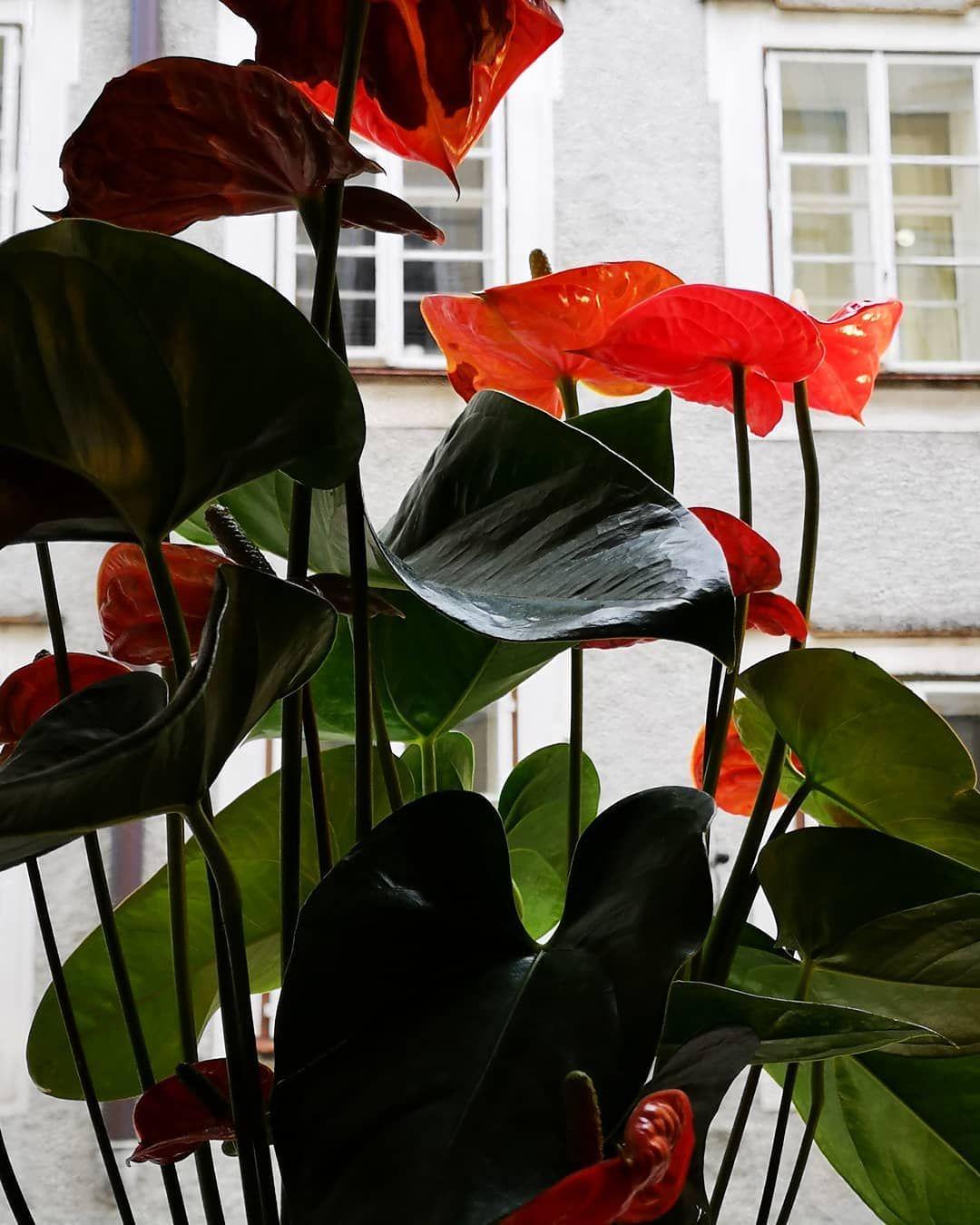 Insekten Garten Foto Fotografie Stadt Kultur Happyday Kunst Blumen Rosen Landschaft Natur Rosen Global Flowers Kindb Plant Leaves Plants Leaves