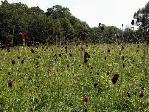 Krwisciag Rozanski Herbs Grapes Farmland