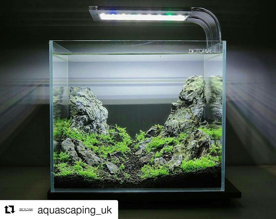 aquariensand rechner aquarium kies waschen oder nicht. Black Bedroom Furniture Sets. Home Design Ideas