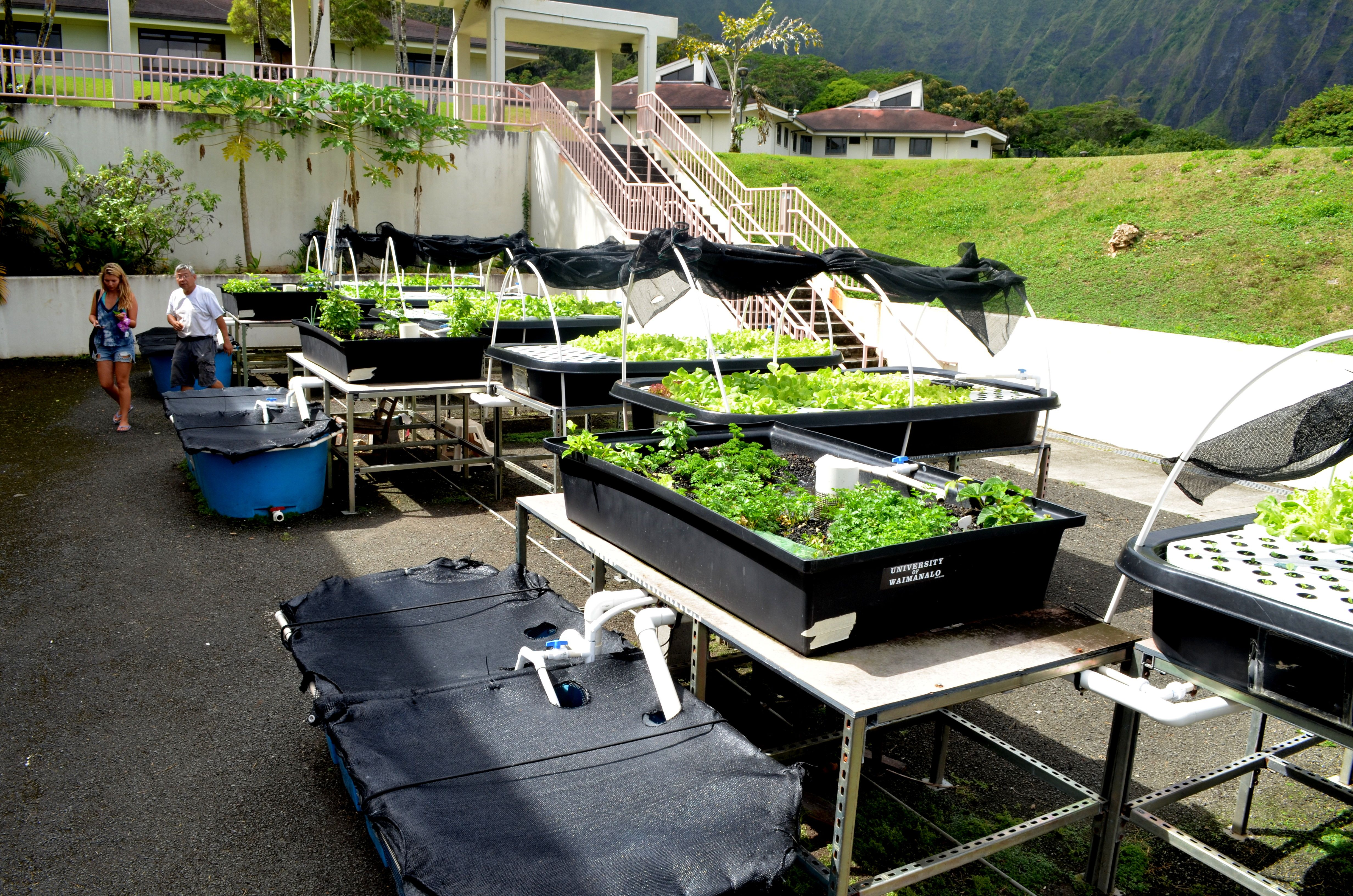 Aquaponics aquaponics system built in the hawaii state for Aquaponics hawaii