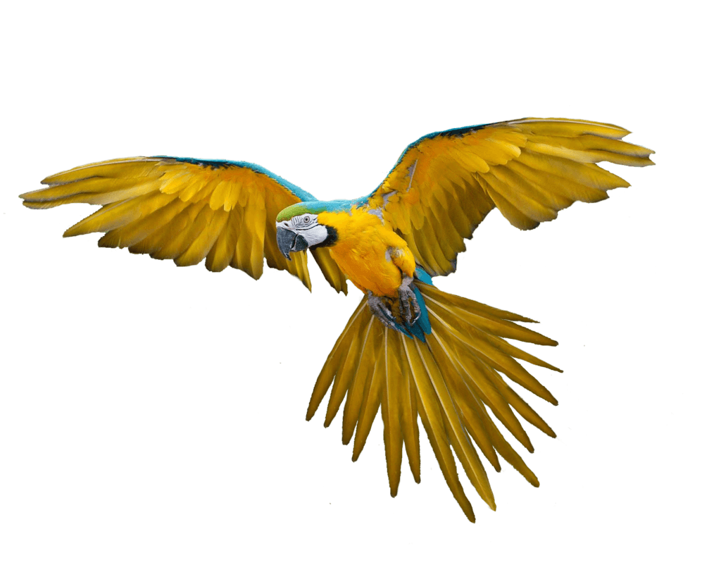 Http Www Freepngimg Com Download Parrot 16 Flying Parrot Png Images Download Png Parrot Flying Bird Parrot