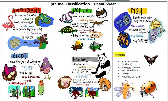 Mrs Addison S Mon Stars Animal Classification Animal