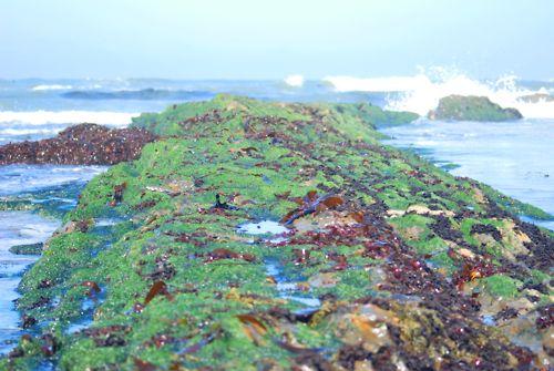 Tide Pool Half Moon Bay Ca Fitzgerald Marine Reserve Tide Pools Coastal Retreat Marine Reserves