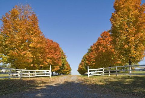 Best Trees For Driveways Driveway Landscaping Tree Lined Driveway Best Shade Trees