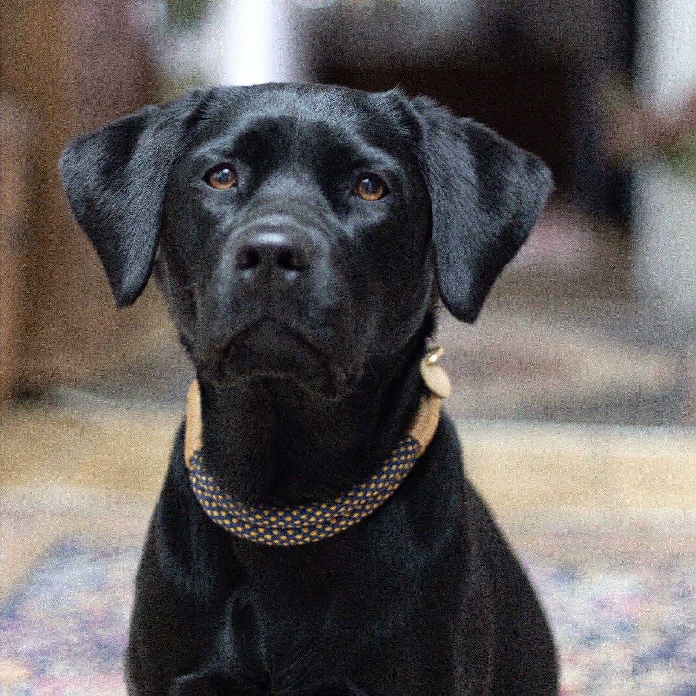 Pin Auf Hunde Accessoires