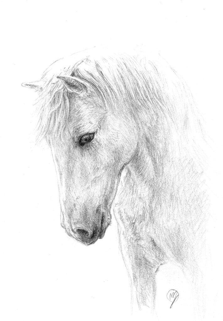 Dessin au crayon facile recherche google dessin en - Dessin facile de cheval ...