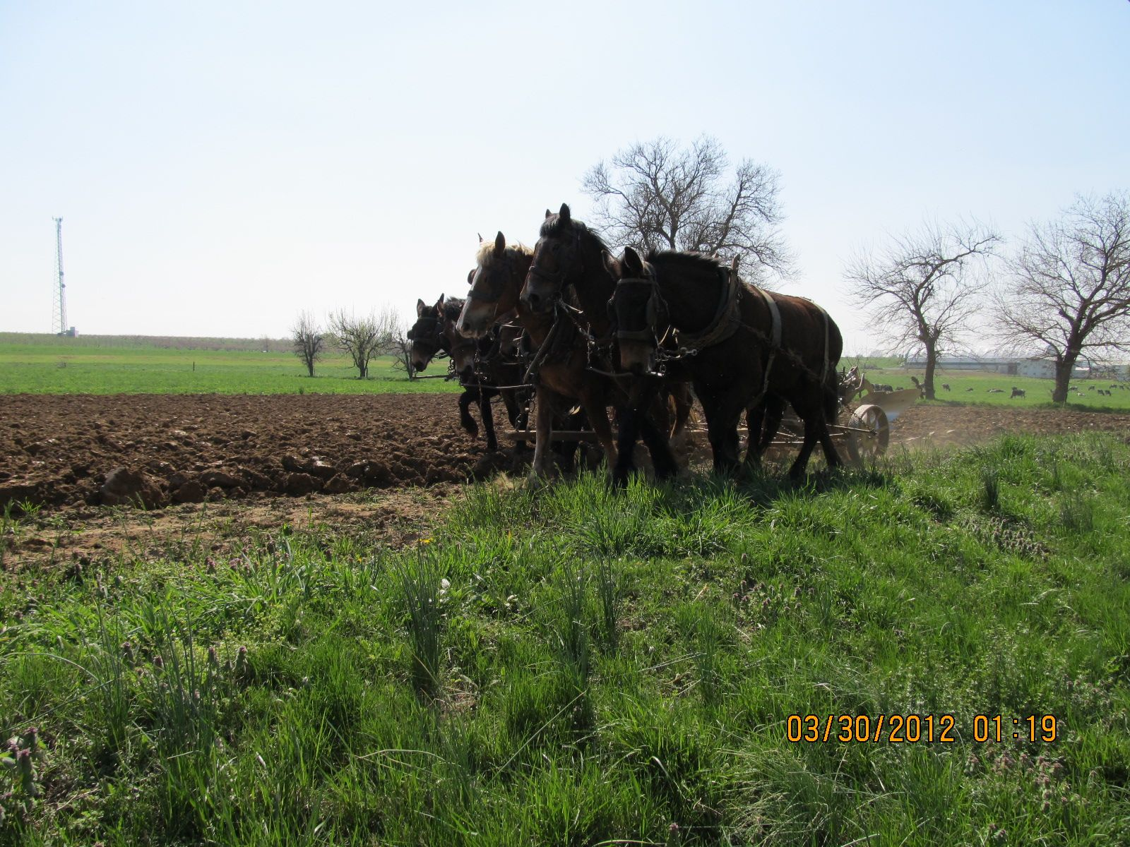 Amish Man working his land (With images) Amish men, The
