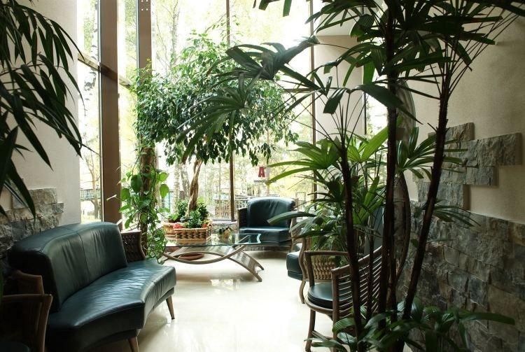 Plantes vertes dans le jardin d\u0027hiver à la maison- idée géniale