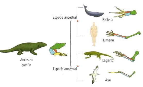 Anatomía comparada | tareas | Pinterest | Anatomía, Biología y La ...