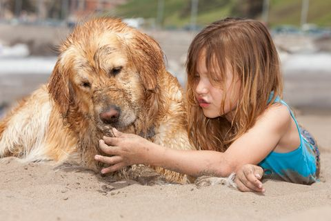 Only Two Pet Friendly Hotels On Paradise Island Nau