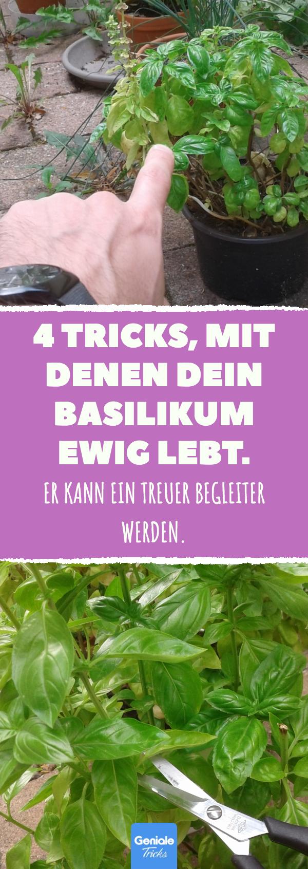 Photo of 4 Tricks, mit denen dein Basilikum ewig lebt