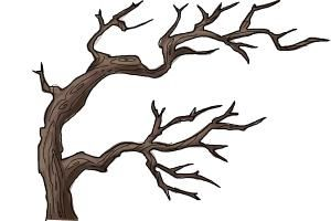 How To Draw A Dead Tree Family Tree Drawing Tree Drawing Tree Sketches
