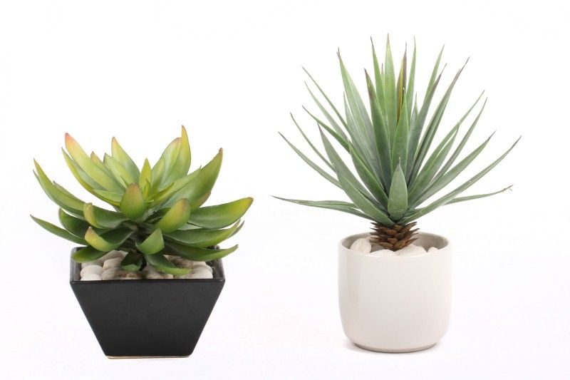 Find Out The Best Ways To Grow And Care For Agave Plants In Pots