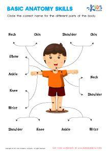Kindergarten Anatomy Worksheets