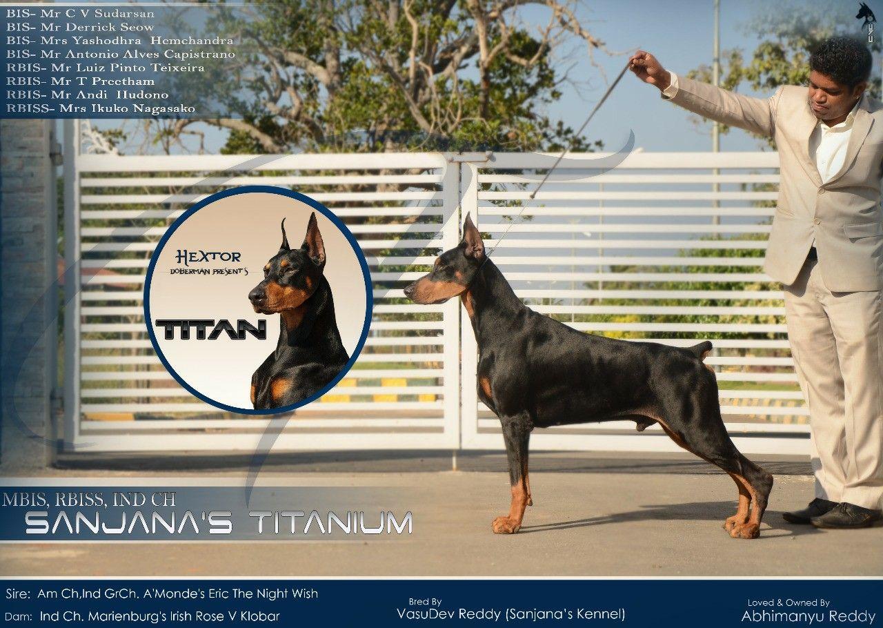 Dog Show India Advertisement For Titan Doberman Creativebycvc